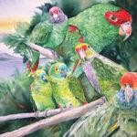Losing Altitude Book — Parrots of Brazil