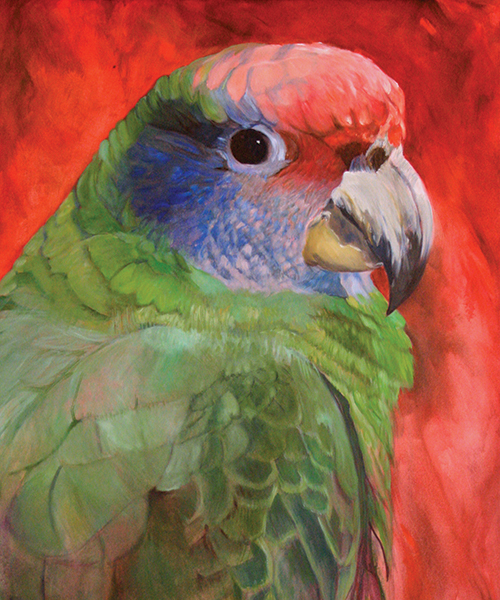 Losing Altitude Book — Red-Tailed Parrot