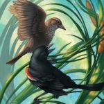 Losing Altitude Book — Tricolored Blackbird