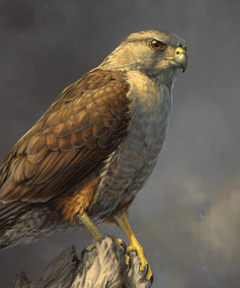 Losing Altitude Book — Ridgways Hawk Print